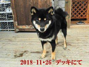 2018-11・26 今日の麻呂 (8).JPG