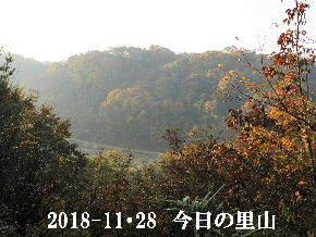 2018-11・28 今日の里山は・・・ (3).JPG