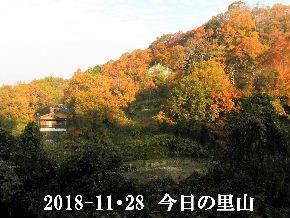 2018-11・28 今日の里山は・・・ (4).JPG