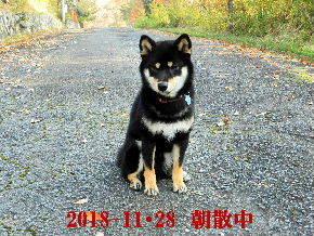 2018-11・28 今日の麻呂 (2).JPG