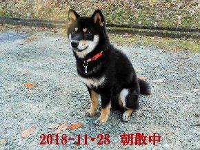 2018-11・28 今日の麻呂 (4).JPG