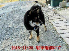 2018-11・28 今日の麻呂 (6).JPG