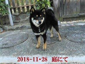 2018-11・28 今日の麻呂 (9).JPG