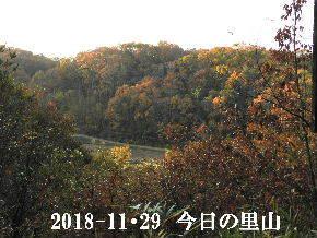 2018-11・29 今日の里山は・・・ (3).JPG