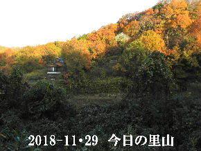 2018-11・29 今日の里山は・・・ (4).JPG