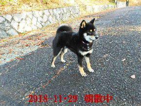 2018-11・29 今日の麻呂 (1).JPG
