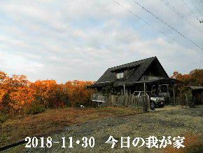 2018-11・30 今日の里山は・・・ (1).JPG