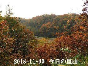 2018-11・30 今日の里山は・・・ (3).JPG