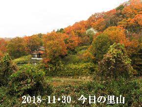 2018-11・30 今日の里山は・・・ (4).JPG