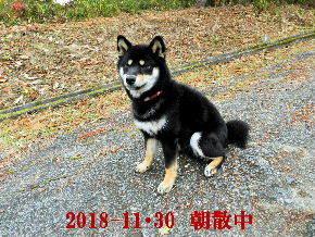 2018-11・30 今日の麻呂 (1).JPG