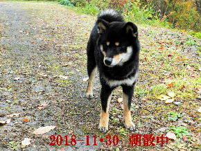 2018-11・30 今日の麻呂 (3).JPG