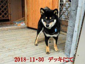 2018-11・30 今日の麻呂 (6).JPG