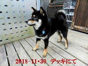 2018-11・30 今日の麻呂 (7).JPG