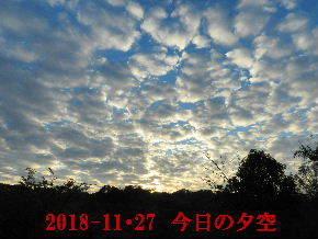 2018-11・27 今日の里山は・・・(4).JPG