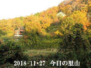2018-11・27 今日の里山は・・・ (3).JPG