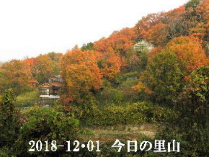 2018-12・01 今日の里山は・・・ (5).JPG