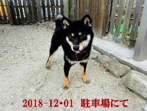 2018-12・01 今日の麻呂 (2).JPG