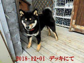 2018-12・01 今日の麻呂 (4).JPG