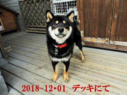 2018-12・01 今日の麻呂 (5).JPG