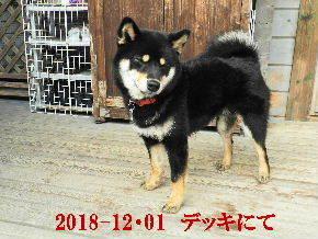 2018-12・01 今日の麻呂 (6).JPG