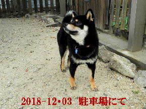 2018-12・03 今日の麻呂 (3).JPG