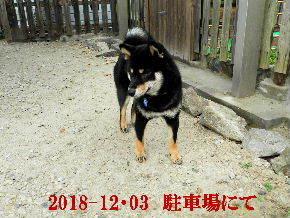 2018-12・03 今日の麻呂 (4).JPG