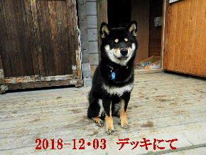 2018-12・03 今日の麻呂 (7).JPG