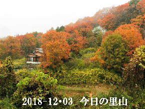 2018-12・03 雨の里山光景・・・ (2).JPG
