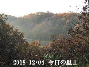 2018-12・04 今日の里山は・・・ (3).JPG