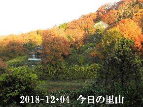 2018-12・04 今日の里山は・・・ (4).JPG