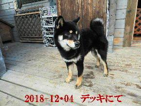 2018-12・04 今日の麻呂 (8).JPG