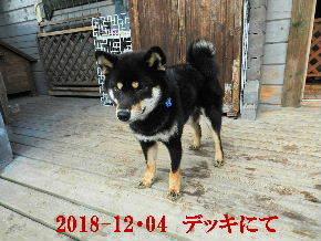 2018-12・04 今日の麻呂 (9).JPG