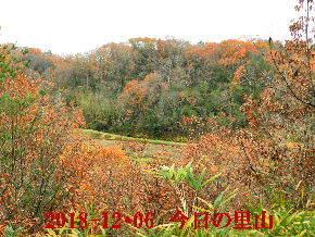 2018-12・06 今日の里山は・・・ (3).JPG