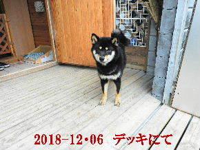 2018-12・06 今日の麻呂 (6).JPG