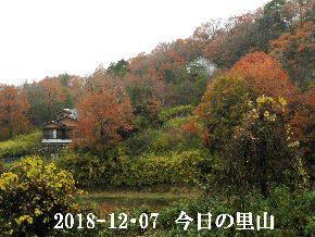 2018-12・07 今日の里山は・・・ (4).JPG