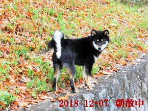 2018-12・07 今日の麻呂 (2).JPG