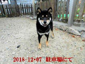 2018-12・07 今日の麻呂 (4).JPG