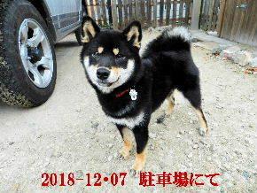 2018-12・07 今日の麻呂 (6).JPG