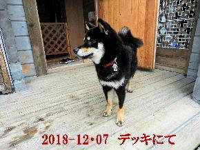 2018-12・07 今日の麻呂 (7).JPG