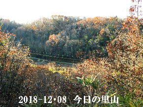 2018-12・08 今日の里山は・・・ (3).JPG