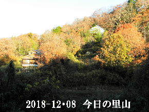 2018-12・08 今日の里山は・・・ (4).JPG