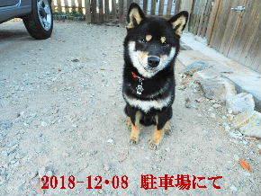 2018-12・08 今日の麻呂 (4).JPG