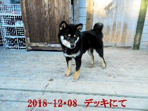 2018-12・08 今日の麻呂 (8).JPG