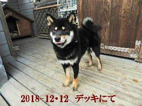 2018-12・12 今日の麻呂 (9).JPG