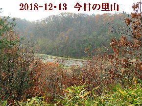 2018-12・13 今日の里山は・・・ (3).JPG