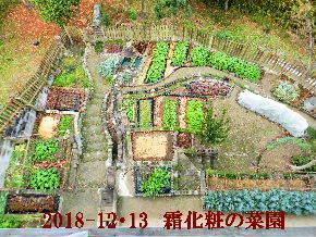 2018-12・13 今日の里山光景 (1).JPG