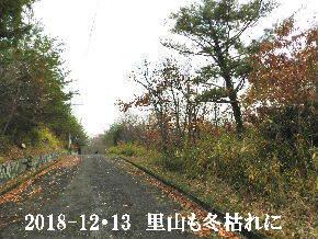 2018-12・13 今日の里山光景 (3).JPG