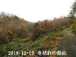 2018-12・13 今日の里山光景 (4).JPG