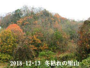 2018-12・13 今日の里山光景 (5).JPG