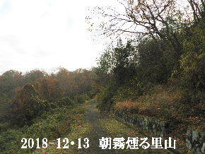 2018-12・13 今日の里山光景 (6).JPG
